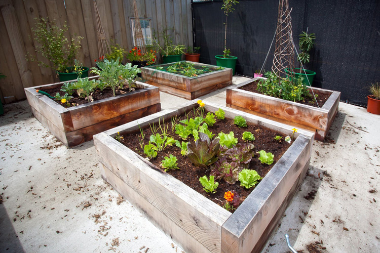 Edible Gardens // Playscape Gallery